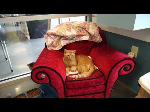 Video: WCJC Animal Shelter, November 2