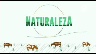 Naturaleza - Naturaleza, alimentación y salud