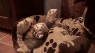 Wake-Up-Call bei den Schafhauskobolden