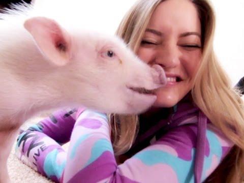 , title : 'BUYING A MINI PIG!!!   iJustine
