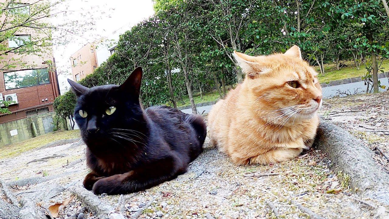 長毛茶トラ猫と短毛茶トラ猫が痴話喧嘩!?ご飯を貰って仲直り