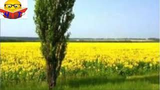 ТОПОЛЯ - ТАРАС ШЕВЧЕНКО Популярные Аудио Книги Детям