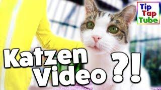 Ab jetzt NUR NOCH Katzen Videos?! TipTapTube