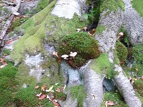 Montagna chistotet a un fungo di unghie