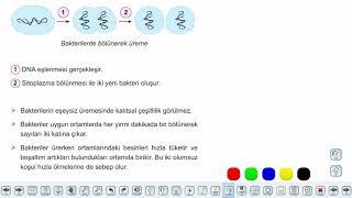 Eğitim Vadisi 9.Sınıf Biyoloji 14.Föy Canlı Alemleri (Bakteriler ve Arkeler) Konu Anlatım Videoları
