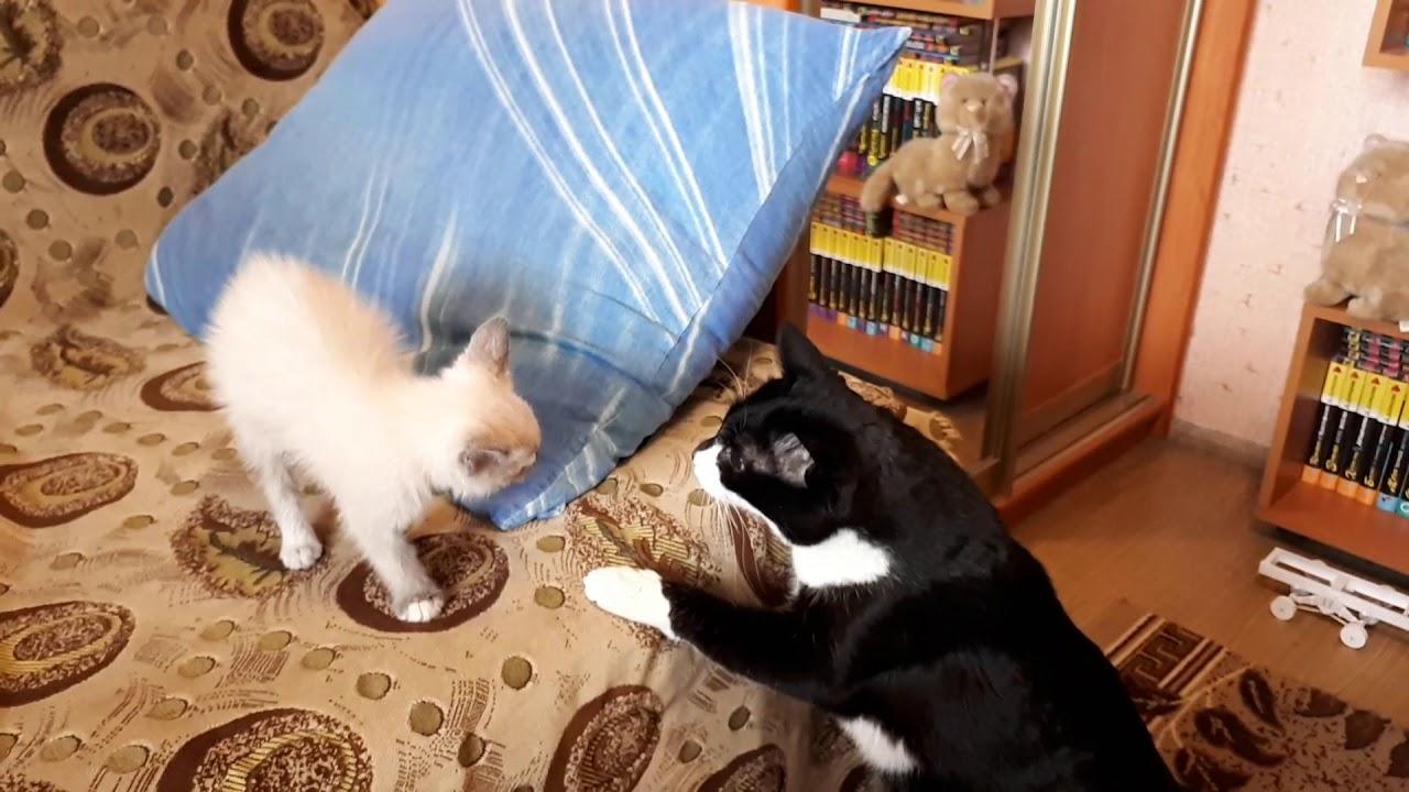 Принесли кота домой фото