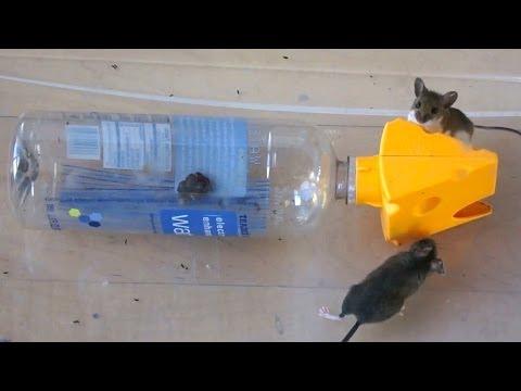 自製特別的開瓶器+水樽..抓到2隻小老鼠