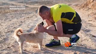 Pet Pals TV:  Desert Dog Rescued by Runner!
