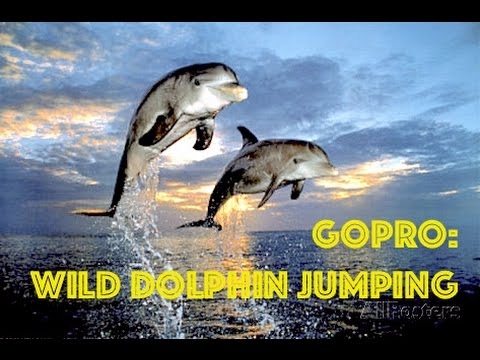iSaw A3 Extreme HD | ♥♥ Dolphin Jumping, Kiss Camera HD Video in Thailand by Freedom Divers Phuket