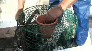 Pescando Pulpos En El Levante Almeriense. Sabor A Mar Pesca Pulpos Con Alonso Quesada