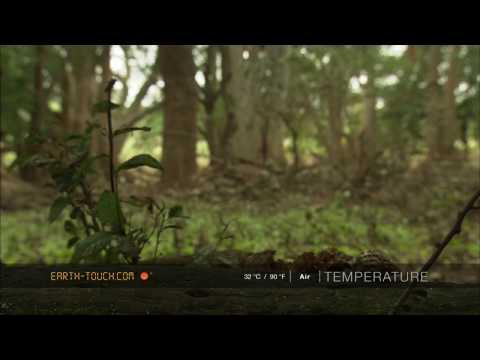 أفلام الطبيعة HD …على أرض الغابة