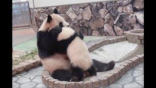 【オトナへの一歩】🐼結浜と良浜ママの日々💕【親子パンダ】Giant Panda -Rauhin&Yuihin-☆Dear days…