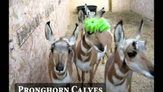 Exotic Pets & Zoological Animals - Colorado State University Veterinary Teaching Hospital