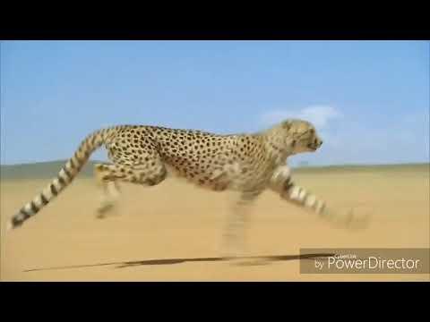 песня Panda E - мы бежим с тобой как будто от гепарда