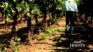 I was the videographer and editor of this video for  Three Hoots Wine in Napa Valley, CA.