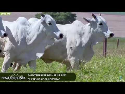 04 MATRIZES PARIDAS - 02 PRENHES 02 COBERTAS