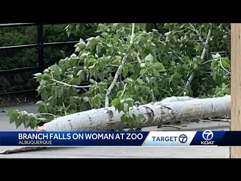 Tree crashes on woman at zoo