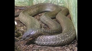 Змеи в Сочи. Осторожно - опасно!