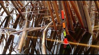 Вечерняя рыбалка на карасика в камише