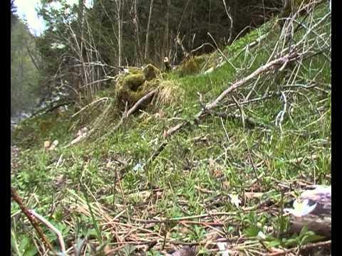 Mezzi da un fungo su legname