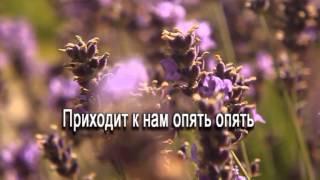 Цветы (плюс)
