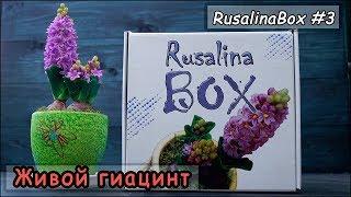 #RusalinaBox №3 ❤ Живой гиацинт ❤ Новая коробочка от Русалины!