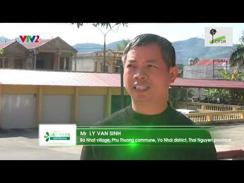 View from Vietnam: Realizing the true values of our forests