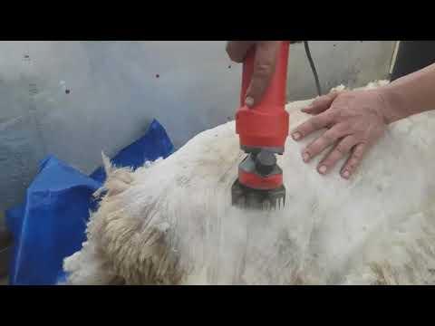 Papillomavirus hond poot
