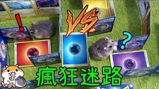 【DIY】超複雜倉鼠迷宮! 耐力及記憶力大挑戰! 小吉最後使出獨有方式回家 Hamster Ultra Maze!