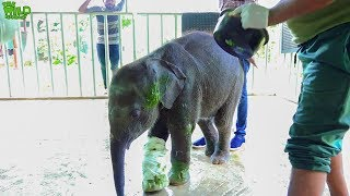 Ayurvedic treatment for cute baby elephant: Acts of Kindness CAUGHT ON TAPE