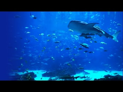 Beautiful HD Aquarium Video - Georgia Aquarium (Ocean Voyager I)