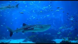 6 HOUR Peaceful Aquarium - Ocean Voyager I screensaver mp3 (High Quality Mp3 mp3)