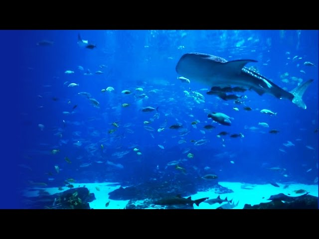 6-Hour Aquarium - Ocean Voyager 1 - MOST WATCHED!