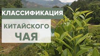 Китайский чай |  Классификация | Зеленый и черный чай.