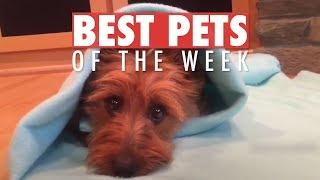 Best Pets of the Week   June 2018 Week 2