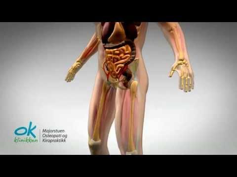 Il trattamento di prostatite senza medici