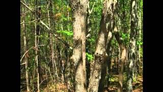 LEDGEND OF THE DOGWOOD TREE A.wmv