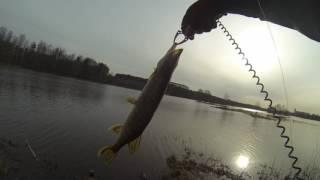 Рыбалка шуваловский карьер спб