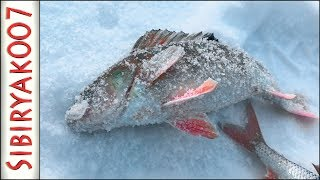 Волшебная ЛУНКА!.. Рыбалка в ГЛУХОЗИМЬЕ на безмотылку чёртик [Sibiryak007]