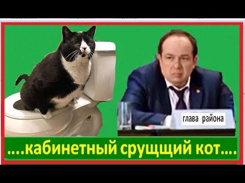 Срущщий кот #Шулико выпучил свои ясны очи!