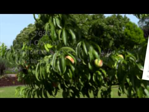 Video Common Fruit Tree Diseases