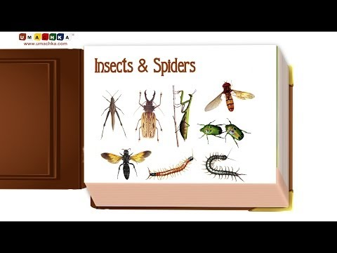 Infant Early Learning Educational Video: Insects & Spiders