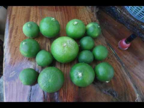 ปรสิตในการรักษาที่ลำไส้เล็กส่วนต้น
