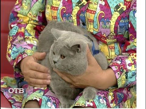 8 августа – Всемирный день кошек онлайн видео