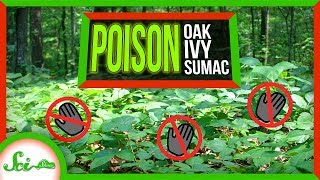 Poor, Misunderstood Poison Ivy by  SciShow