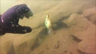 Treasure Hunting in Alpine Lake, California
