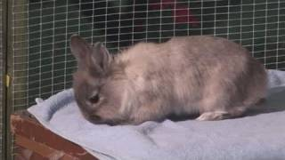 How To Look After For A Baby Rabbits