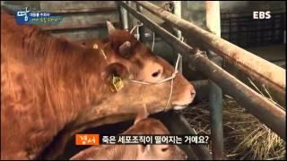 청소년 리얼체험 땀 - 열혈 부녀, 대동물을 구하다_#002