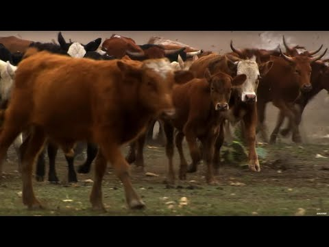$2000 Cattle Drive Challenge | Top Gear USA