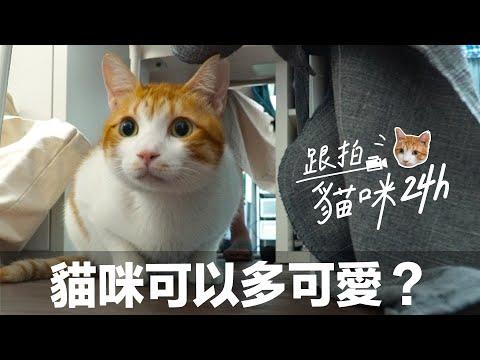 貓咪蛋捲的一天 當貓都比當人好